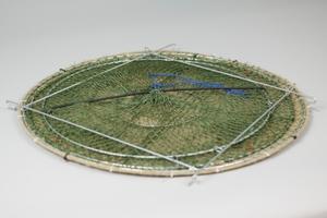 Carapax fiskmjärde, Mörten