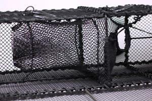 Leppefiskbur, svältkammare