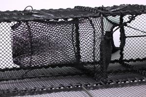 Leppefiskbur, förlängd svältkammare
