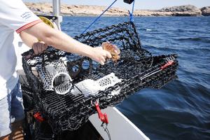 Hummertina Fritidsfiske, Fällbar
